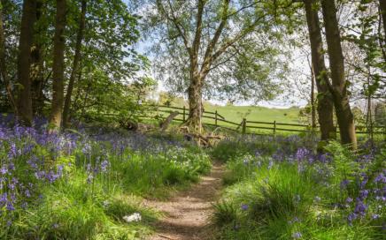 Spring Wood