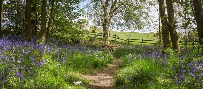 Spring Wood Path